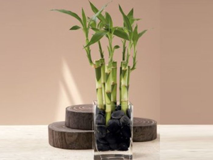 Jardineras Con Bambu. Gallery Of En Esta Pequea Plantacin De Bamb ...