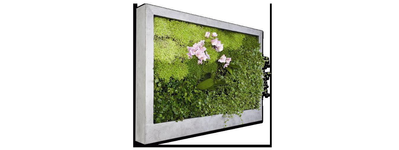 Combinar el color de la pared con los marcos     Decoración con Madera